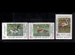 Iran: 1971, Sumpf- und Wasservögel