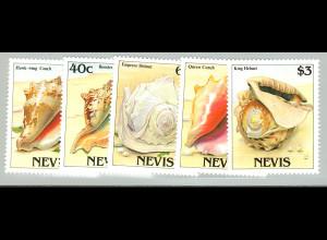 Nevis: 1988, Meeresschnecken