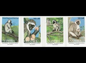 Namibia: 2004, Grüne Meerkatze (Affe)