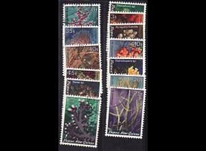 Papua Neuguniea: 1982, Korallen